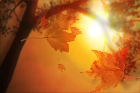 شعر برای غروب پاییز | غمگین ترین و دپ ترین اشعار در وصف غروب پاییز