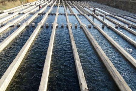 سیل به مزارع آبزیپروری جنوب چقدر خسارت وارد کرد ؟
