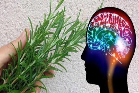 بهترین گیاهان برای تقویت هوش و حافظه