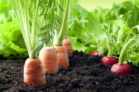 با انواع سبزیجات ریشه ای آشنا شوید