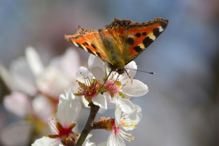 80 عکس جذاب و باکیفیت شکوفه بادام بهاری