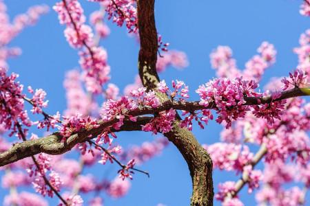 گلچینی از زیباترین و خاص ترین عکس های گل ارغوان