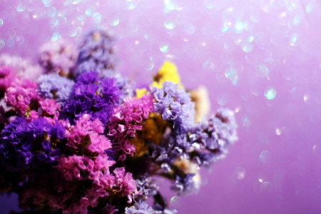 60 عکس گل استاتیس (لیمونیوم) با رنگ های خاص و متنوع