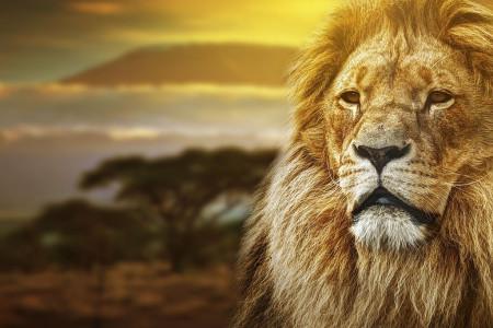 دانلود 15 افکت صدای شیر جنگل با کیفیت بالا