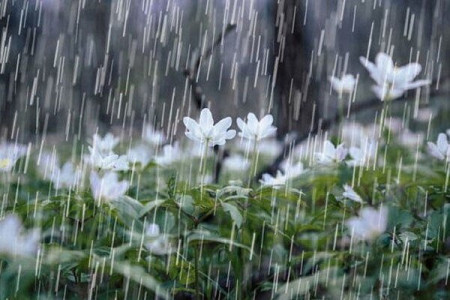 برف و باران از امشب مهمان بیشتر مناطق کشور