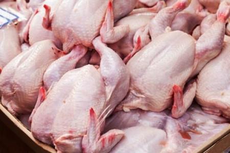 قیمت مرغ باز هم پرکشید!