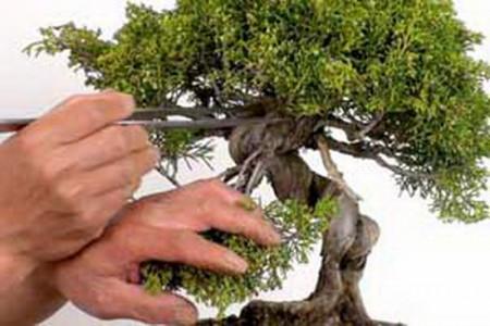 نگهداری بونسای،بررسی موارد نگهداری از گیاه بونسای