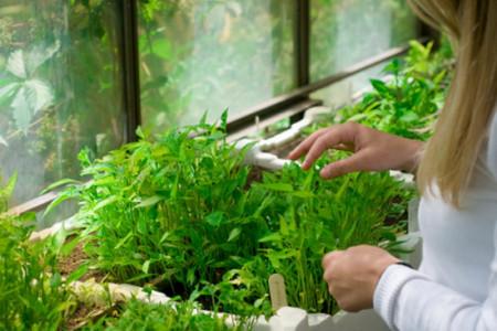 رسیدگی به گیاه آپارتمانی،برای طراوت بخشیدن به گیاه خود چه کنیم؟