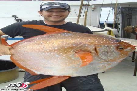 کشف اولین گونه ماهیهای خونگرم در جهان