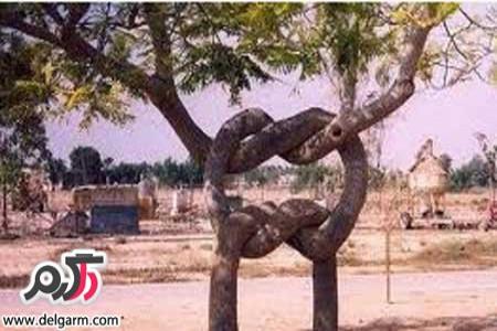 قصه کودکانه دو درخت همسایه