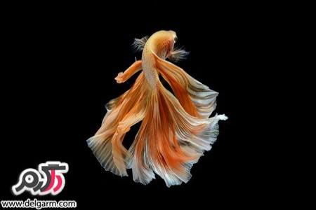 تصاویری از ماهی های زیبا و عجیب و غریب