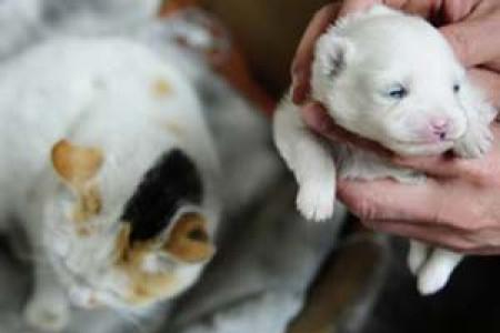 گربه ی که توله سگ به دنیا آورد .!!