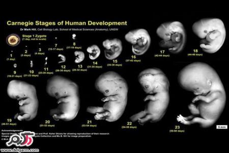سلامت جنین در دوران بارداری