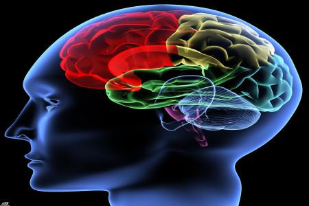 همه چیز در مورد عملکرد مغز انسان+تصویر/کاملترین مقاله