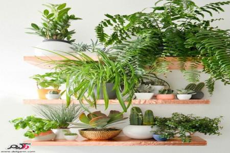 دکوراسیون منزل با گیاهان زینتی
