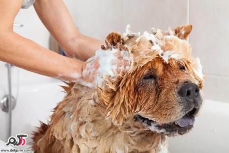 آموزش حمام كردن سگ ها و بچه سگ ها