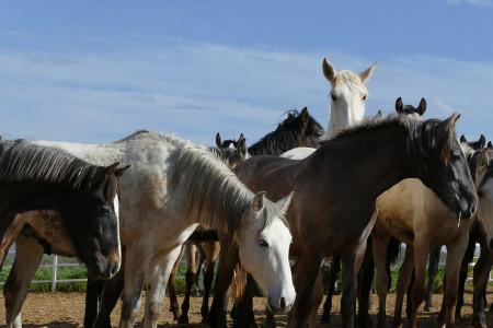 درمان بیماری های انگلی در اسب