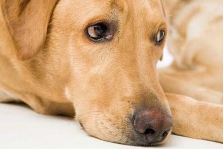 آشنایی و درمان خطرناک ترین و بی خطرترین مشکلات پوستی در سگ
