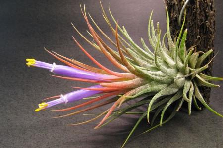راهنمای نگهداری و پرورش گیاهان هوازی