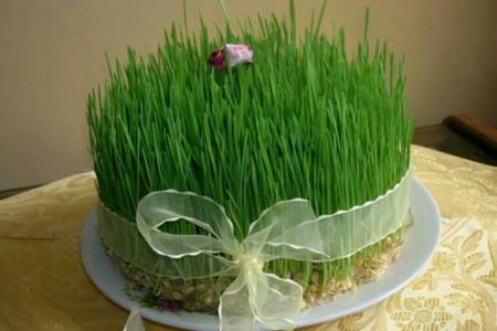 آموزش مرحله به مرحله کاشت سبزه با گندم