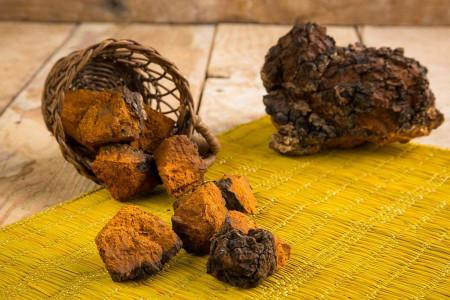 قارچ چاگا : ۱۵ خاصیت اثبات شده دارویی و درمانی قارچ چاگا