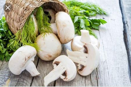 طریقه تشخیص قارچ سالم از فاسد