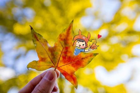 ۱۷ شعر کودکانه با موضوع پاییز + آهنگ کودکانه