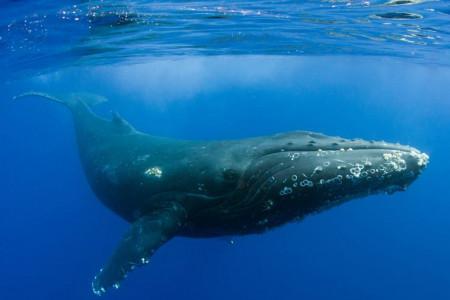 آیا وال با نهنگ فرق دارد ، نام فارسی وال و دلفین چیست؟