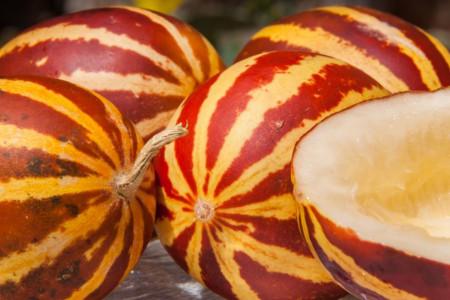 میوه دستنبو : ۱۶ خاصیت دارویی و درمانی شاماما برای بدن