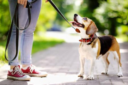 چطور با کمترین هزینه سگمان را تربیت کنیم؟