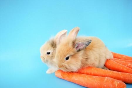 فواید و مضرات هویج برای خرگوش