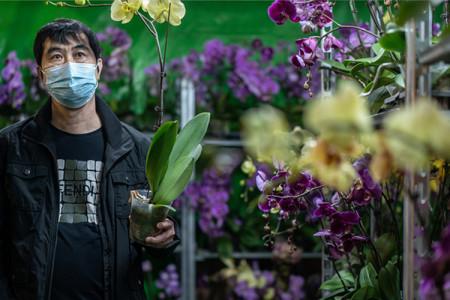 آیا گل و گیاه خانگی ناقل ویروس کرونا هستند؟
