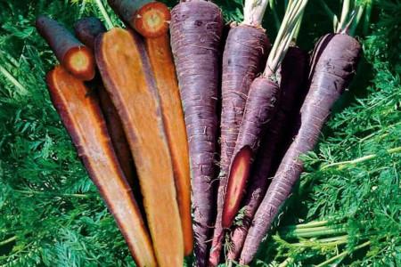 هویج سیاه چیست و چه خواصی دارد ؟