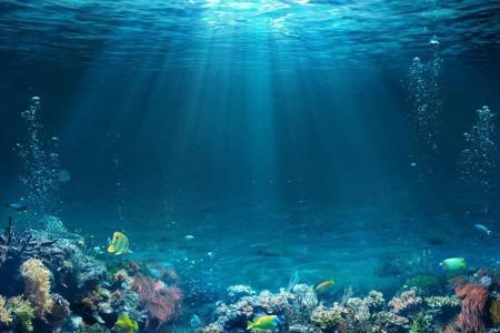 رصد موجودی عجیب شبیه مو در آبهای استرالیا + عکس