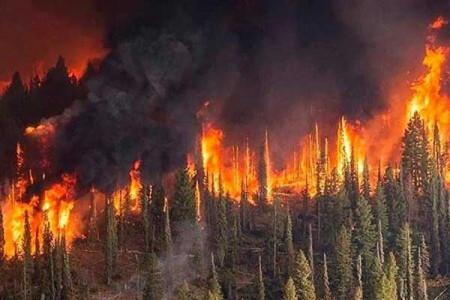 آتش سوزی مهیب در جنگل های خاییز استان کهکلویه و بویراحمد
