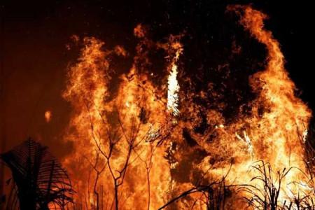 علت آتش سوزی پارک چیتگر چه بود + فیلم