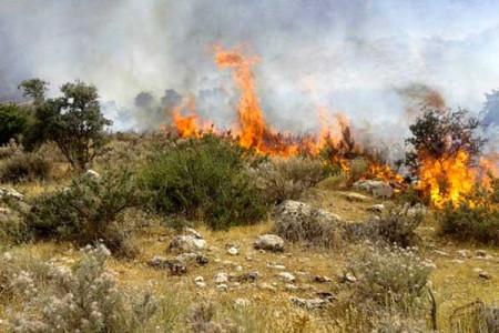 جزئیات آتش سوزی پارک افرا