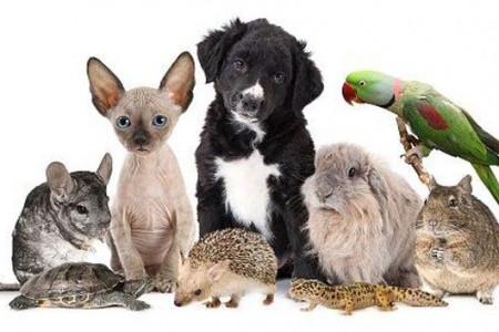 تعبیر خواب حیوانات : ۲۵ نشانه و تعبیر دیدن خواب حیوانات مختلف