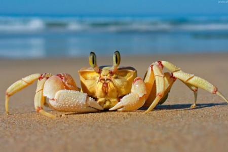 روز جهانی خرچنگ در تقویم سال ۹۹ چه روزی است ؟