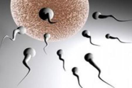 بانک اسپرم چیست و چگونه از اسپرمها استفاده می کنند؟