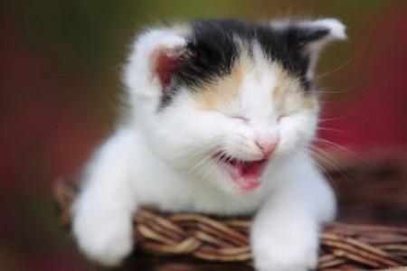 تصاویر فوق العاده زیبا و دیدنی از خنده حیوانات