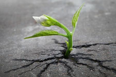 حیات راه خودش را میابد:تصاویر زیبای گیاهانی که برای حیات تسلیم نشدند