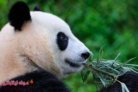 عکس خرس های بانمک و وحشی