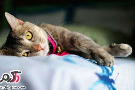 عکس گربه ناز و مامانی