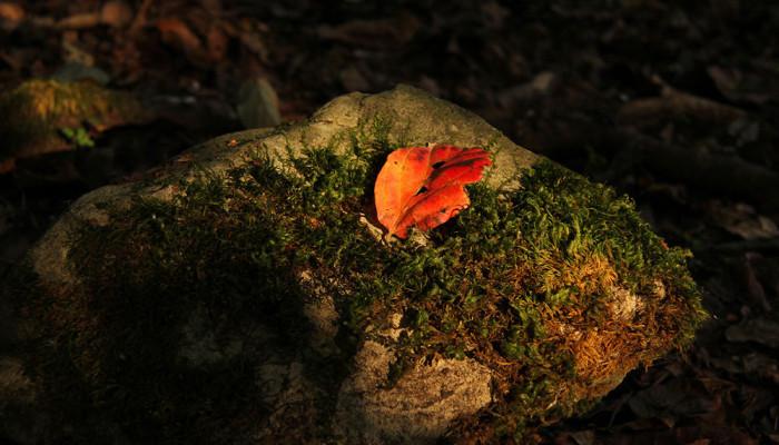 تصاویر پارک جنگلی جوارم