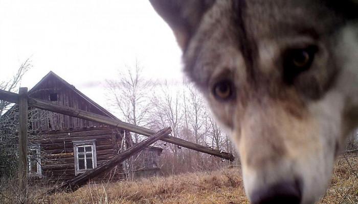 تصاویر عکس های سال رویترز از حیوانات