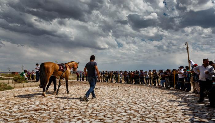 تصاویر کورس اسب دوانی آذربایجان شرقی