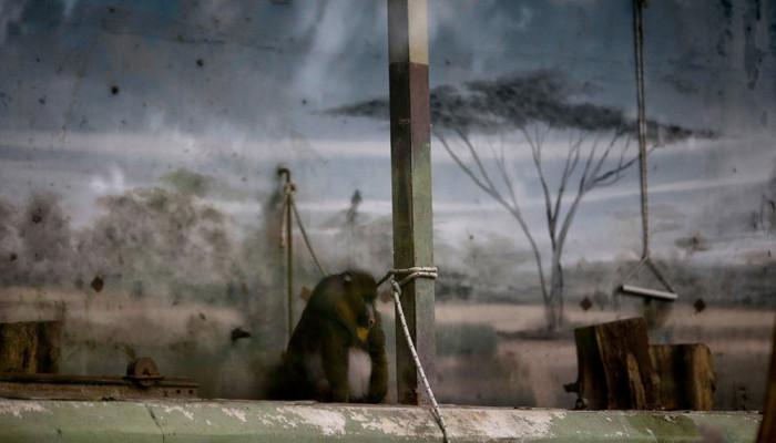 تصاویر حیوانات باغ وحش تعطیل شده بوینس آیرس