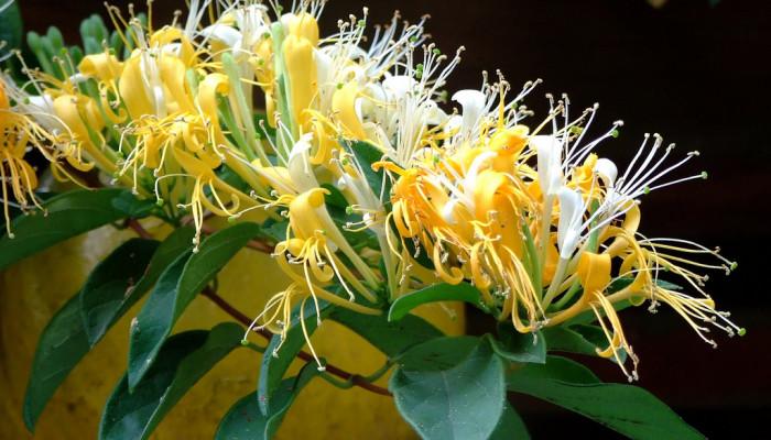آیا به نگهداری و پرورش گل یاس علاقه دارید؟