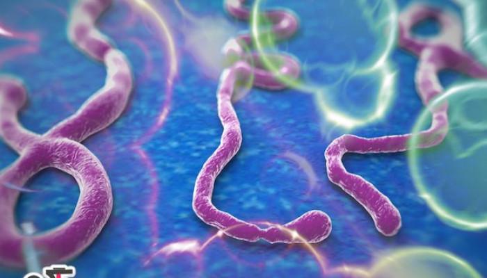 همه چیز در مورد بیماری ابولا